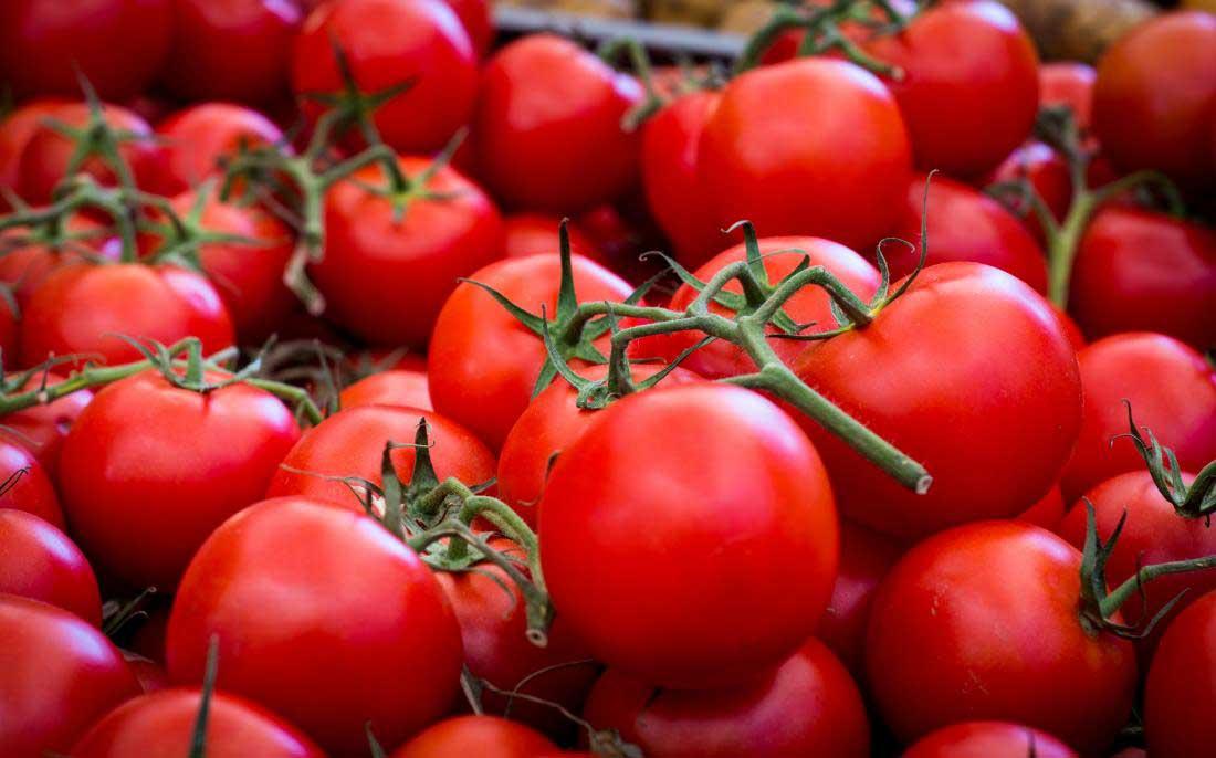 گوجه فرنگی چگونه آسیب های ریه ناشی از سیگار کشیدن را از بین میبرد