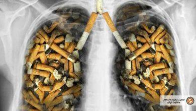 حقایقی در باره دخانیات
